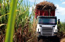 Combustíveis alternativos - solução para o transporte sustentável